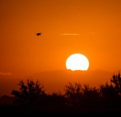 Shag sunset (ajecaldwell11) Tags: xe3 sunset ankh fujifilm light sun hawkesbay newzealand napier silhouette bird balloffire sky orange shag caldwell dusk clouds