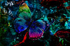 journey of colour (sw2018) Tags: butterfly blue flower insect nature art texture colour blend
