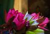 Bagan, Myanmar (Burma) (Daniel Kliza) Tags: burma myanmar burmese mandalay bagan inle inlelake hotairballoon ballooning oriental orientalballoonin monk buddha buddhism robe temple yangon nyangshwe shwedagon pagoda kalaw trek theingyi market tanaka thanaka betel fisherman flying ubein bridge sunset silhouette amarapura inwa