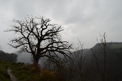 CUMBRES BORRASCOSAS (Luis Manuel C.) Tags: tree trees natura nature naturaleza mountain
