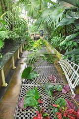 Pruning, Palm House, Kew Gardens (BEARTOMCAT (Bear)) Tags: nikond7100 kew kewgardens royalbotanicgardenskew