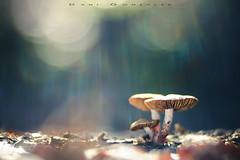 Protege al niño cariño (www.studio360fotografia.es) Tags: leitzcolorplan90mm25 setas valdeinfierno leica mushroom bokeh desenfoque colors colores fantasy fantasia proyector projector olympus omd em10 fungi