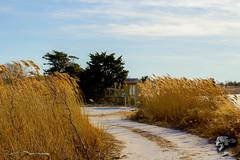 IMG_0031 (Sickbones_photography) Tags: beach ocean seaside nj newjersey blackwhite color sand water dream arcade