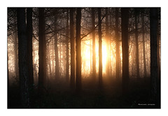 soleil levant (Bruno-photos2013) Tags: paysage forêt sunrise leverdujour nature contrejour back light backlight forest arbres
