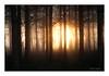 soleil levant (Bruno-photos2013) Tags: paysage forêt sunrise leverdujour nature contrejour back light backlight forest arbres