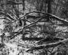 Winter_SAF4686 (sara97) Tags: cold ice jeffersonbarrackspark missouri outdoors photobysaraannefinke saintlouis snow winter winter201718 winterweather copyright©2018saraannefinke