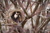 Funny little Bird (mraderstorf) Tags: hungry cute bush leaf canine brown tiny surprise small white twig next fur tree eye preciious bird dog ear pretty perro sit chihuahua bed animal