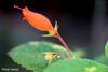 Macrophotographie (photolenvol) Tags: macro jardinbotanique fleur plante serre macrophotographie