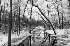 Stream (mswan777) Tags: 1855mm nikkor landscape d5100 nikon white black monochrome ansel michigan winter snow scenic outdoor nature wood forest lake stream ice water
