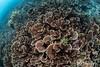 Raja35 (Lea's UW Photography) Tags: rajaampat indonesia underwater wideangle canon5dmk3 canonef815mm fisheye lealee subal corals