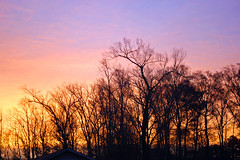 Sunrise Behind The Trees. (dccradio) Tags: lumberton nc northcarolina robesoncounty outside outdoors tree trees treebranches treelimbs branches sky colorful beauty naturalbeauty beautiful pretty morning goodmorning morningsky silhouette nature natural landscape morningsun sun sunrise risingsun