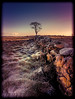 The Gift of Silence (RonnieLMills) Tags: gibbs island stone wall tree sunrise slidersunday hss slider sunday