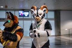 DSC01547 (Kory / Leo Nardo) Tags: furry fursuit suiting dance party dj con convention further confusion fc san jose marriott center 2018 fc2018 pupleo leo kory fur costume costuming cosplay animals