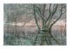 Rönneå - Konica Pro 160 (magnus.joensson) Tags: sweden swedish skåne skäralid snow winter december stream flow contax aria sunrise zeiss sonnar 100mm konica pro 160 exp polarizer