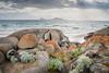 Whisky Bay rock garden (laurie.g.w) Tags: wilsonsprom whiskybay sun rocks water beach sky rain nationalpark cloud storm coast shoreline seascape australia victoria southgippsland texture light glare landscape
