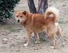 "Kotohira-045 (photozaki) Tags: ""dogs cats"" dog dogs inu cat cats neko shikoku japan ohenro88 ohenro pilgrimage"