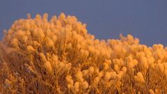 IMG_4376 (Mr Thinktank) Tags: raureif frost
