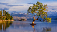#thatwanakatree (Nicholas Chewy) Tags: wanaka tree mitakon 50mm sony a7r2 a7rii a7r mk2 new zealand mountains lake sunrise sunset epic light