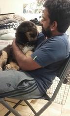21430390_10213831593370954_7893694935442850009_n (natedetienne) Tags: ash tibetan mastiff puppy tm