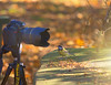 "Here's looking at You... #Interpretation #Contact #CrazyTuesdayTheme"" #7DWF (KissThePixel) Tags: interpretation nikond750 nikondf nikond7000 wildlife wildlifephotography 7dwf crazytuesdaytheme contact bird birdwatching greattit wildbirds birds camera fun creative tabletop nature naturephotography garden winter february fullframe 200mmlens f28"