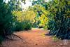 DSCF1015-2 (gkim1185) Tags: australia perth kingspark nature flowers kangaroopaws