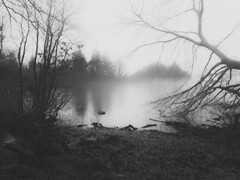 》2 days to the flood (MDG_Photography) Tags: mist fog lake water ireland mood atmosphere bnw blackandwhite bw nature landscape soft focus canon haze cold winter