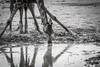 Namibia Etosha Giraffe (Sas & Rikske) Tags: canon eos1d x canoneos1dx canon100400 eric bruyninckx riksketervuren namibië namibia namib animal animals safari africa afrika etoshagamepark etosha game park etoshapan pan greatwhiteplace great white place oshindonga ndonga landscape green blauwevogelreizen 2017 giraffedrinking giraffe drink drinking waterhole water reflection