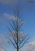 """Baum, Himmel und Wolken"" (joergpeterjunk) Tags: leipzig gohlisnord outdoor bahndamm pflanze baum 360°drehungimstamm canoneos50d canonefs1785mmf456isusm wolke himmel"