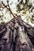 Bark (Nicholas Erwin) Tags: nature naturephotography depthoffield bokeh tree bark contrast nikon d610 2018g nikkor plattsburgh newyork ny unitedstatesofamerica usa fav10 fav25