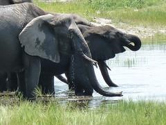 ellies Chobe floodplain