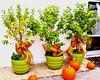 plants and pumpkins (ljwyro) Tags: plants pumpkins pots