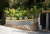 El Dorado Casitas Royale (wildhareuk) Tags: canoneos500d eldoradocasitasroyale grounds hotel mexico tamron18270mm wall mexico2016 plant plantpot pots img5577dxo