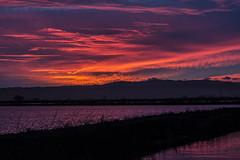 Sacramento National Wildlife Refuge (opheliosnaps) Tags: colorful purple red orange blue pink wildlife refuge sacramento willows california clouds streaks evening dark bright