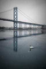 Swan Afloat. Windsor, ON. (Paul Thibodeau) Tags: photooftheday windsor nikond500 birdsofafeather 52weeksofwe swan ambassadorbridge detroitriver