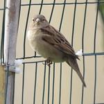 bird on a fence 1 15 18 thumbnail