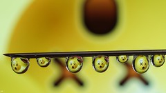 Smiley (YᗩSᗰIᘉᗴ HᗴᘉS +13 000 000 thx) Tags: smile smiley cool drop droplet humour yellow hensyasmine namur belgium wallonie europa aaa بلجيكا belgique namuroise proxi belga info look photo friends bélgica ベルギー белгия բելգիա belgio 벨기에 belgia бельгия 比利时 bel be ngc saariysqualitypictures wow yasminehensinterst intersting interestingness eu fr greatphotographers lanamuroise
