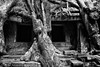 The eyes of the monster (rvjak) Tags: angkor cambodge cambodia black white noir blanc bw d750 nikon asia asie sudest southeast ruin ruine arbre tree siem reap