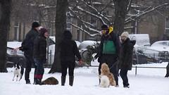 Snowy Edinburgh 030 (byronv2) Tags: edinburgh edimbourg scotland snow weather winter harrisonpark polwarth slateford park man woman dog dogs peoplewatching cand