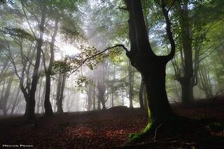 Τhe Spirit of the Forest