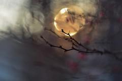 Berberis and sunny bokeh. (agnieszka.a.morawska) Tags: sun winter dof helios44m helios berberis bkhq beyondbokeh bokehlicious bokeh