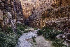 Jordan Wadi Mujib
