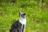What??? (liberusualis1) Tags: cat minino felino