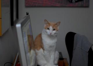 Otis visiting at the computer