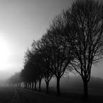 Allee im Nebel 2 - Fog avenue 2 - Explore Feb 2, 2018 #376 thumbnail