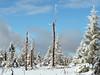 Winter (michaelmueller410) Tags: trees snow snowy ice bäume forest wald woods wood dead frozen icy fir spruce pine tree clouds blue sky harz wolken blauer himmel eisig vereist tannen fichten schnee