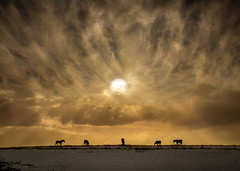 Under Gods Eye (adrians_art) Tags: equines horses animals sky clouds sunrise dawn silhouettes shadows landscapes skyscapes light dark gold yellow red amber orange patterns abstracts