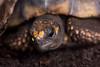 Schildkröte (grasso.gino) Tags: tiere animals natur nature zoo dortmund nikon d5200 schildkröte turtle