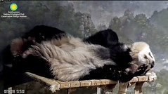 2018_02-10 (gkoo19681) Tags: beibei chubbycubby fuzzywuzzy feetsies toofers curledpaws naptime comfy adorable precious toocute darling ccncby nationalzoo