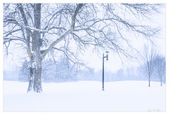 A Snow Day (Ping...) Tags: snow tree lamp post michigan