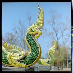 temple serpents (Matt Jones (Krasang)) Tags: c41 room temperature developed serpents temple thailand rolleiflex film colour 6x6 lomography